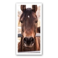 Portret cheval 1