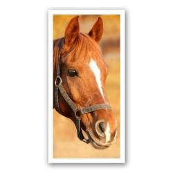 Portret cheval 2