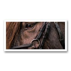 L'œil cheval 1