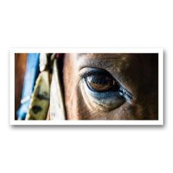 L'œil cheval 2